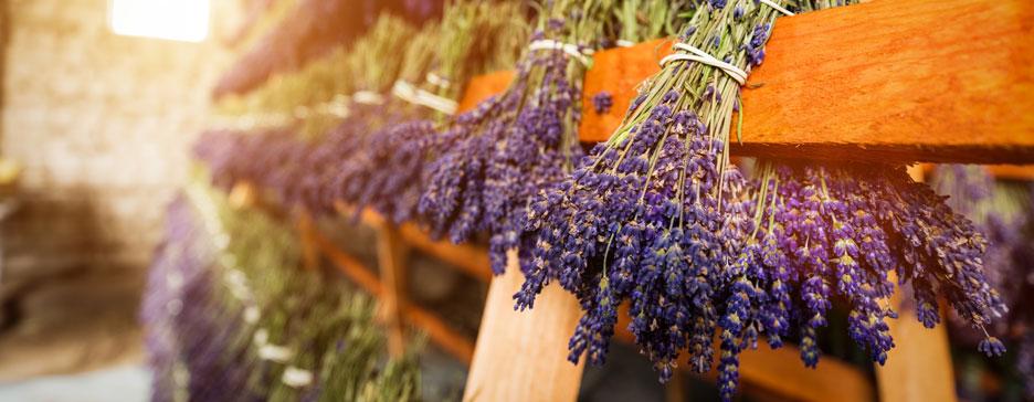 Lavender Essential Oil Raw Ingredients