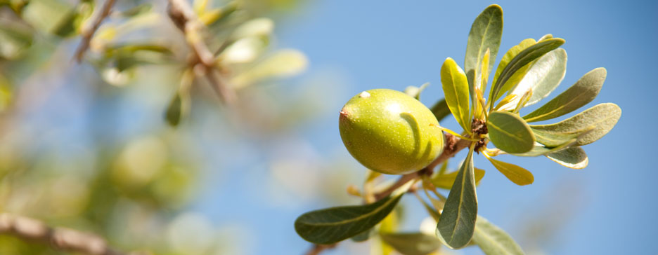 Best Argan Oil for Face and Skin